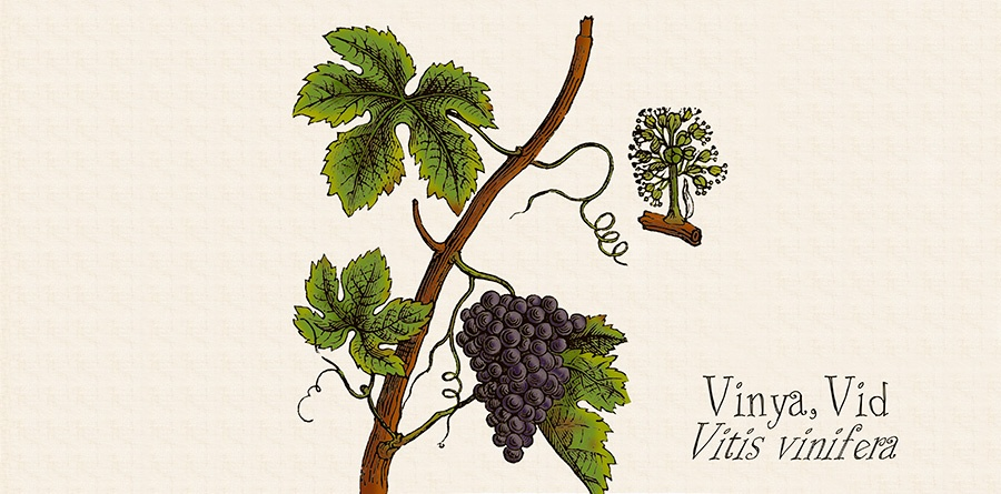ilustraciones original cv